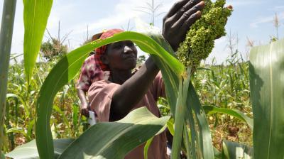 Cross-sector partnerships in fragile settings