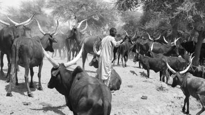 Pandemic meets poverty: Pandemonium for pastoralists in the Sahel