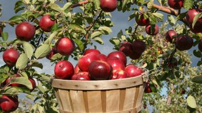 EU enlargement package: Can one bad apple spoil the whole barrel?