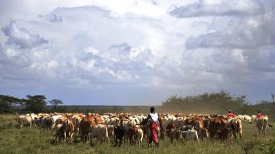 Pastoralist adaptation in Burkina Faso