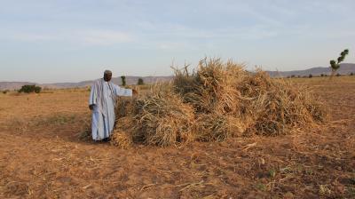 Examining the migration development nexus in Kayes Region, Mali