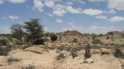 NCEA Advice on Sustainable programme  development in Somalia