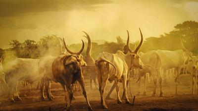 Rethinking responses to pastoralism-related conflicts
